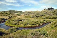 沿海被风吹扫森林去的河的通过 免版税图库摄影