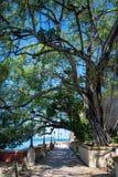 沿海走道在树下 库存照片