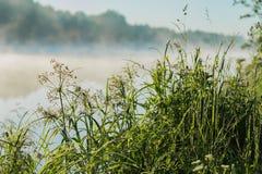 沿海野草,在湖的安静的清早,黎明 光束通过雾 季节的概念,环境 库存照片