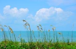 沿海洋海岸线的美丽的海燕麦 库存照片