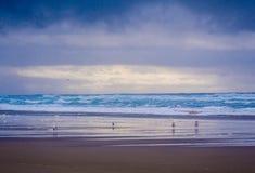 沿海滩的一个早晨 免版税库存照片