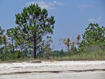 沿海滩的树在希尔顿黑德岛 免版税库存照片