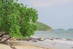 沿海滩的树 免版税库存图片