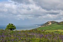 沿海从Eype,多西特俯视 免版税库存照片
