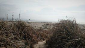 沿海sandunes 库存照片