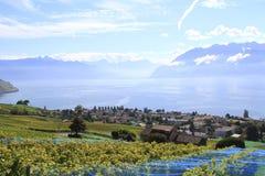 沿湖,瑞士的葡萄园 免版税库存图片