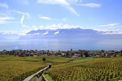 沿湖,瑞士的葡萄园 图库摄影