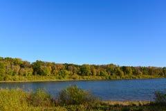 沿湖Cenaiko岸的树  库存图片