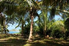 沿热带加勒比森林的海运 免版税图库摄影