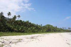 沿热带海滩加勒比森林的海运 库存照片