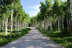 沿白杨木颤抖的路结构树 免版税库存照片