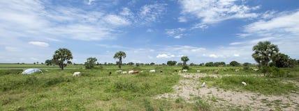 沿白色尼罗,南苏丹的村庄 免版税图库摄影