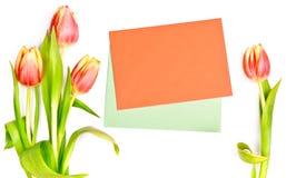 沿着二个信包的郁金香在空白背景 免版税库存图片