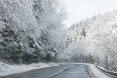 沿着用雪盖的路的美丽的树 免版税库存照片
