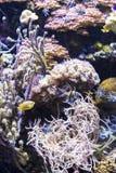 沿礁石的热带鱼 免版税图库摄影