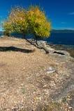 沿秋天加拿大海岸上色西部 库存照片