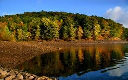 沿秋天湖岸结构树 免版税库存照片