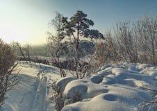 沿积雪的灌木和树的冬天足迹 免版税库存图片