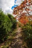 沿绿色灌木的秋天道路 免版税库存图片