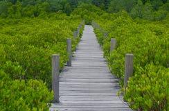 沿美洲红树森林的木桥梁 免版税库存照片