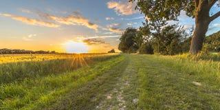 沿老橡木轨道的麦田在日落 库存图片
