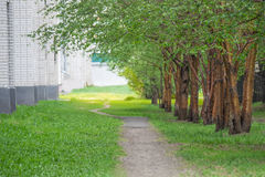 沿老绿色树的空的路在城市胡同 免版税库存照片