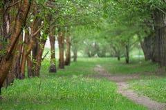 沿老绿色树,树苗的空的路在城市停放 免版税库存照片