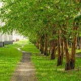 沿老绿色树,树苗的空的路在城市停放 库存图片