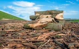 沿荷兰堤堰的被堆的厚实的树干 免版税库存照片