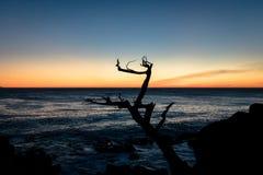沿著名17英里驱动-蒙特里,加利福尼亚,美国的日落视图 库存照片
