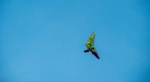 沿蓝天的吊滑翔机飞行 免版税库存照片