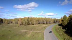 沿蜿蜒通过桦树木头的路的空中汽车驱动 股票视频