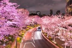沿街道在东京中间地区, Minato-Ku,东京,日本的有启发性樱桃树在春天, 2017年 免版税库存照片