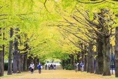 沿街道的长度的美丽的银杏树 免版税图库摄影
