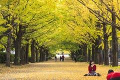 沿街道的长度的银杏树 库存图片