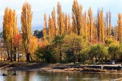 沿街道的长度的银杏树 库存照片