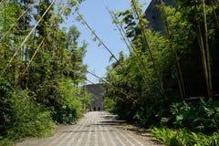 沿被铺的道路的竹子在现代大厦前在晴朗的夏天 免版税库存图片