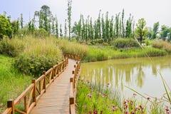沿象草和开花的Planked人行桥湖岸 免版税图库摄影