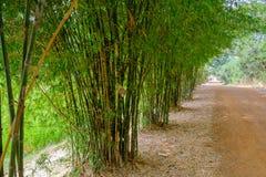 沿路排队的绿色竹子 免版税库存照片
