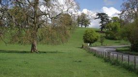 沿路旁的夏令时风景在英国乡下 免版税图库摄影