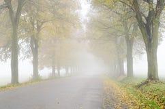 沿路的五颜六色的椴树胡同 免版税库存照片
