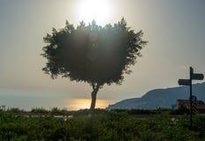 沿路的树在海附近的岸日落的 免版税图库摄影