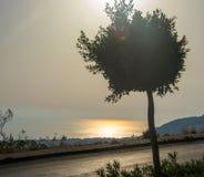 沿路的树在海附近的岸日落的 图库摄影