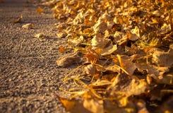 沿路的金黄秋叶 文本的空间 库存图片