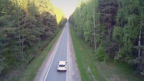 沿路的鸟瞰图白色自动驱动在老杉木之间 股票视频