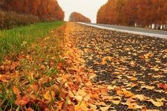 沿路的黄色秋叶 库存图片