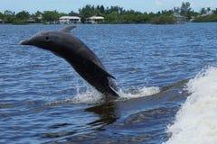 沿边的海豚游泳一条小船在Ft 梅尔思海滩,佛罗里达 库存照片