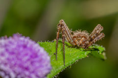 沿边的蜘蛛一朵野花 图库摄影