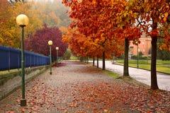 沿边路在晨曲,意大利的秋季树 库存照片
