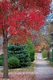 沿边路的秋天颜色 图库摄影